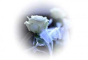 Rose oval 1